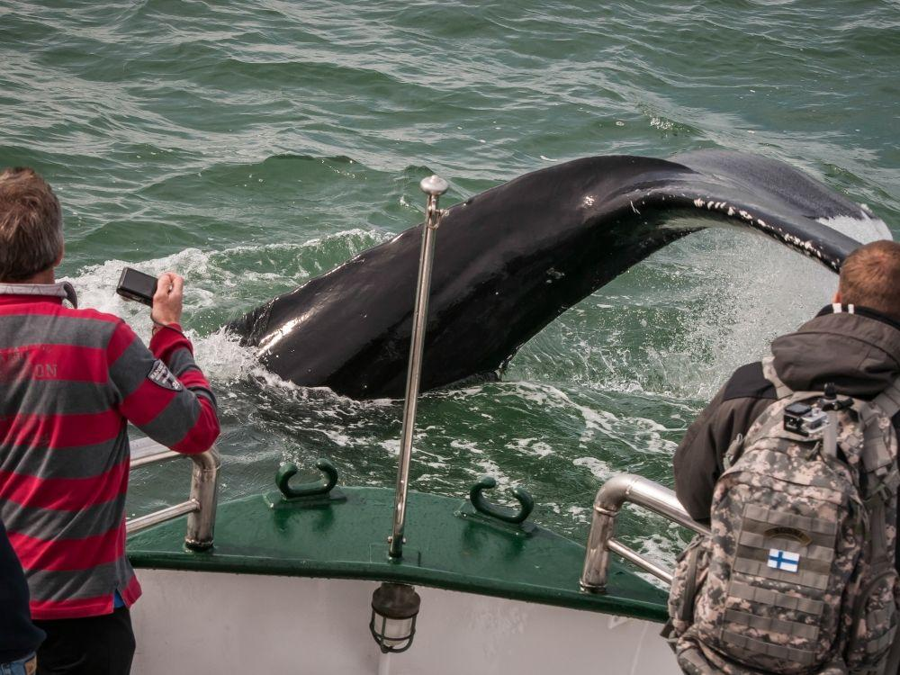 Husavik Whale Watching Break All Iceland